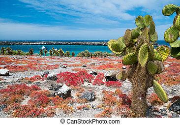 South Plaza island - Beautiful landscape of Galapagos South ...