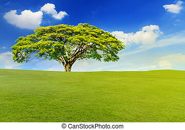 Beautiful landscape of green meadow with big tree