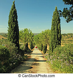 Tuscany countryside with country road lined with cypress and pine trees, Tuscany, Italy