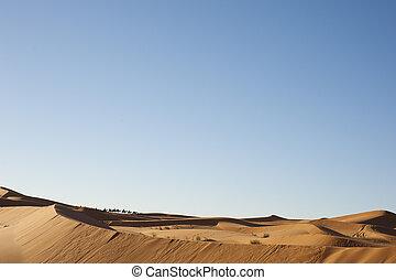 beautiful landscape of the desert