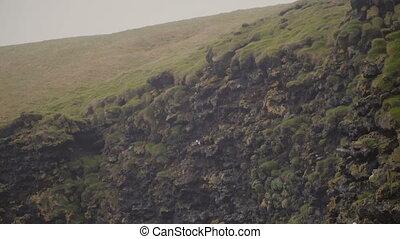 Beautiful landscape of the precipice on the Vestmannaeyjar...