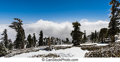Beautiful landscape on Mount San Antonio (Mt Baldy); white clouds in the background covering the valley; Los Angeles county, California