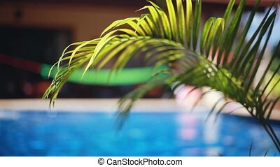 Beautiful landscape palms leaves and changes focus to swimming pool with hammock. 1920x1080, hd Vacation concept