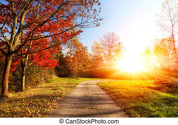 beautiful landscape, sunny autumn morning in the park
