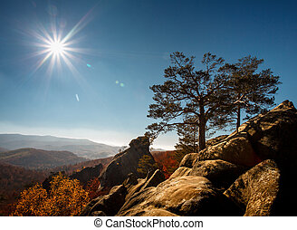 tree on a top mountain under blue sky in sunny day