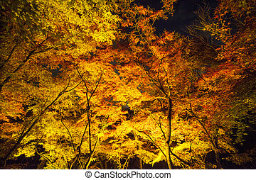 beautiful landscape veiw of autumn season with colorful maple tree Klyomizu dera temple Kyoto is most popular travel destination in Japan