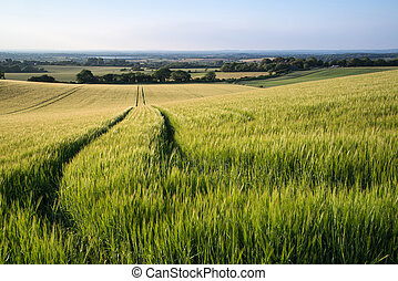 Beautiful landscape wheat field in Summer sunlight evening