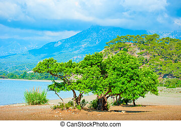 beautiful landscape with a green tree