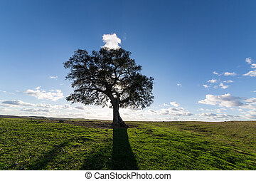 Beautiful Landscape with a Lonely Tree, sun backlit