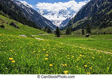 Beautiful landscape with Alps in Stilluptal, Mayrhofen, Austria.