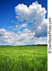 Beautiful landscape with green meadow and cloudy sky. Compositio