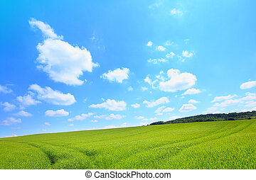 Beautiful landscape with growing wheat