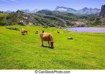 beautiful landscape with lake and cows