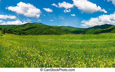 beautiful landscape with meadow in mountains. wild herbs on...