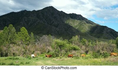 Beautiful landscape with mountains trees and a livestock.