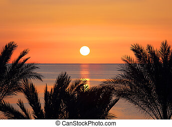 palms and sunrise over sea