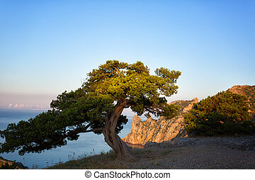 Beautiful landscape with pine, sea and cliffs in Crimea, illuminated by the sunrise sun