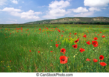Beautiful landscape with poppies. Field in Crimea.