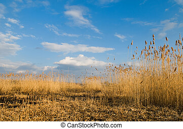 Beautiful landscape with reeds