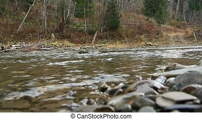 mountainous river Prut in the forest of Carpathian mountains...