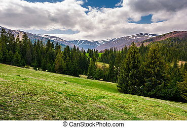 beautiful landscape with spruce forest. landscape of...
