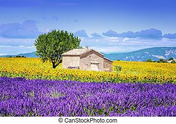 sunflower field over cloudy blue sky - Beautiful landscape...