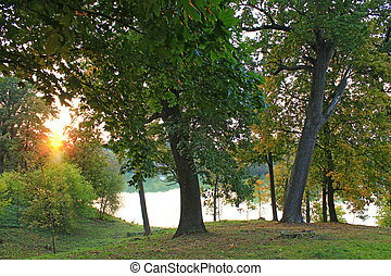 landscape with sunset in the park park with big green trees and lake
