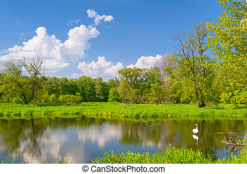 Beautiful landscape with swan in the flood waters of Narew river, Poland.