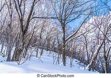 Beautiful landscape with tree and branch in snow winter ...