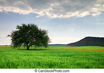 Beautiful Landscape with tree and mountain.