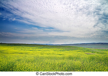 Beautiful Landscape with yellow flowers. Spring meadow. Field in