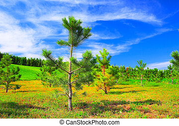 Beautiful landscape with young pine trees
