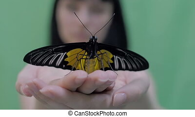 Beautiful large butterfly spread its wings, sitting on the...