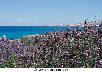 Beautiful lavender flowers on a background of the sea.