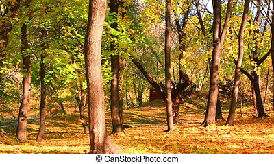 Beautiful leaf fall in autumn park in a sunny day
