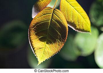 beautiful leaf on black outdoors