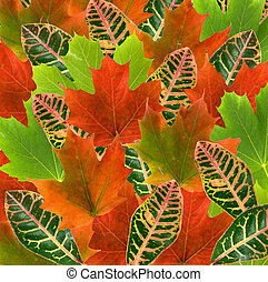 beautiful leave fall colors