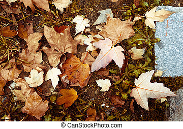 Leaves of the fall