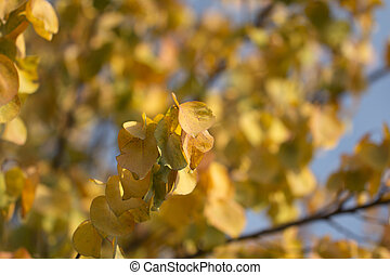 beautiful leaves on a tree in autumn