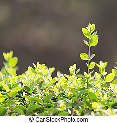 beautiful leaves on the bush in nature