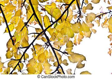 beautiful leaves on the tree
