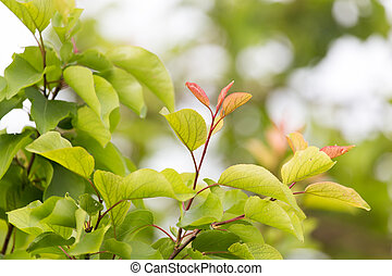 beautiful leaves on the tree in nature