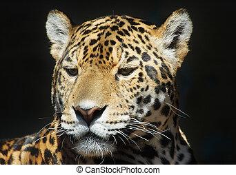 leopard - beautiful leopard