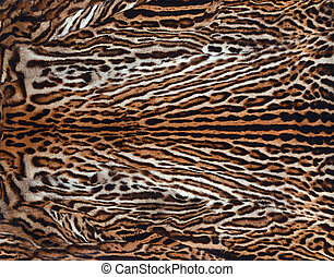 beautiful leopard skin