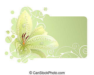 Beautiful light frame with white lily