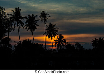 Beautiful light of sunset behind the coconut trees.