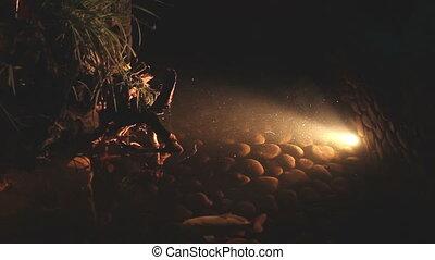 beautiful lighting underwater life