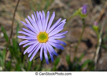 Beautiful lilac flower