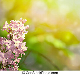 Beautiful Lilac flowers background with bokeh