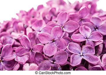 Beautiful lilac flowers
